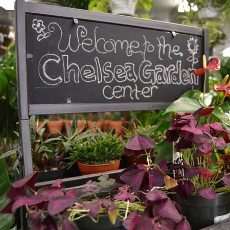 Chelsea Garden Center 58 Pos 10 S Nurseries