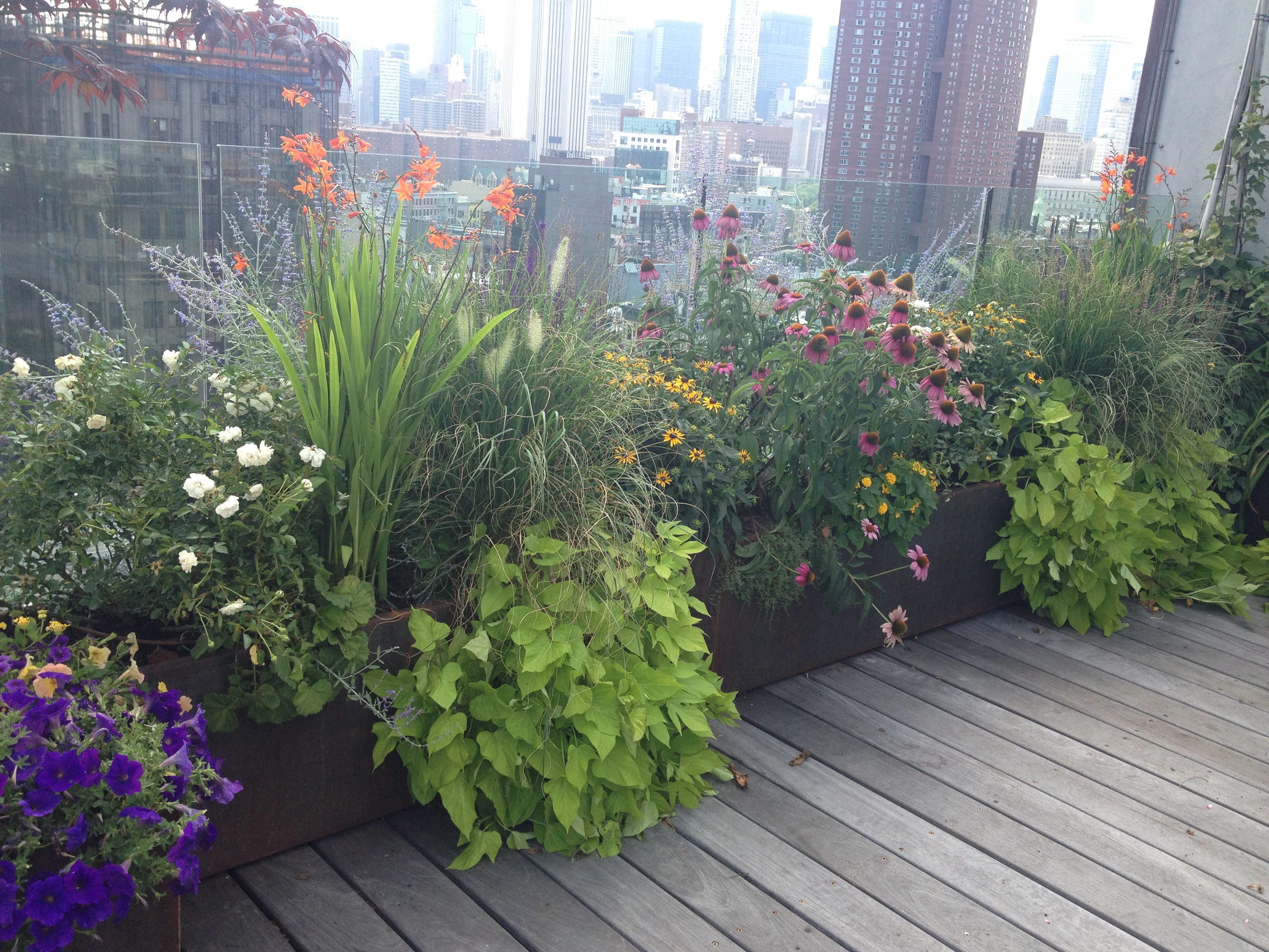 East Village terrace grown in 2