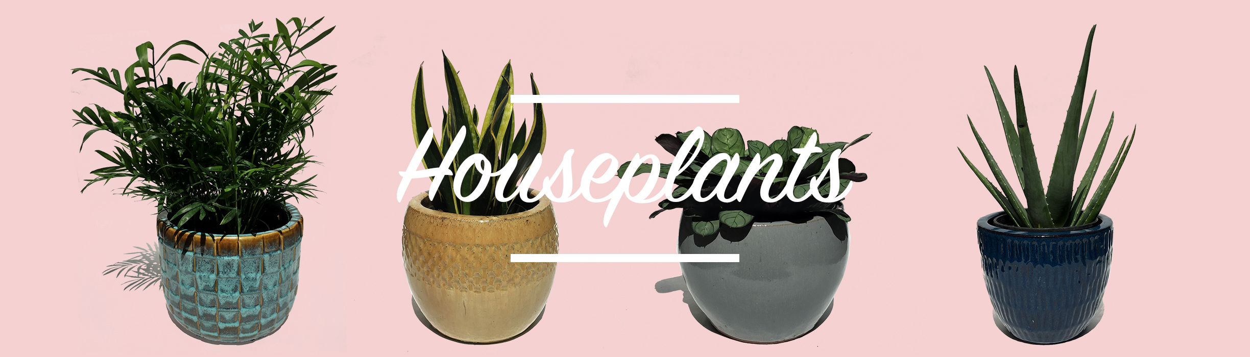 Give Yourself Some Apartment Therapy With Our Wide Range Of Unique Indoor Tropicals Shipped Up From Trusted Growers In Florida Small Succulents To