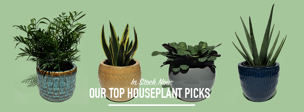 home_featured_houseplantsd